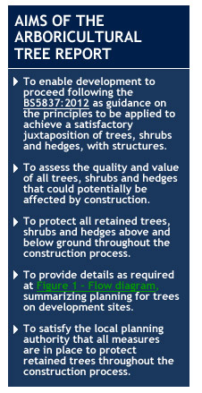 Aims of the Arboricultural tree report